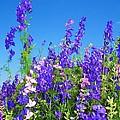 Wildflowers #11 by Robert ONeil