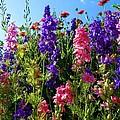 Wildflowers #14 by Robert ONeil