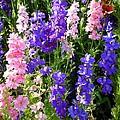 Wildflowers #15 by Robert ONeil