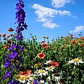 Wildflowers #7 by Robert ONeil