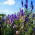 Wildflowers #9 by Robert ONeil