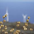 Wildflowers And Auwahi Wind Towers Kahikinui Maui Hawaii by Sharon Mau