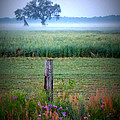 Wildflowers And Fog by Sheri McLeroy