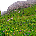 Wildflowers And Mountainous Bluffs At Point Amour In Labrador by Ruth Hager