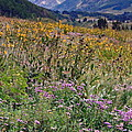 Wildflowers And Mountains  by Sally Weigand
