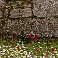 Wildflowers And Olympia Ruins   #9508 by J L Woody Wooden