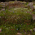 Wildflowers And Olympia Ruins   #9594 by J L Woody Wooden