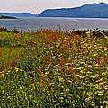 Wildflowers At Lobster Cove Head In Gros Morne Np-nl by Ruth Hager