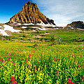 Wildflowers At Logan Pass by Joe Mamer