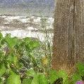 Wildflowers At The Beach by Barbie Corbett-Newmin