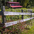 Wildflowers At The Fence by Debra and Dave Vanderlaan