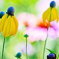 Wildflowers by Ben Graham