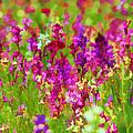 Wildflowers by Beth Fox