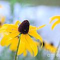 Wildflowers by Edward Fielding