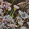 Wildflowers by Hanny Heim
