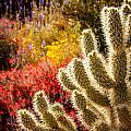 Wildflowers Ignite  by Nicholas  Pappagallo Jr