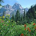 1m9371-h-wildflowers In Cascade Canyon, Tetons by Ed  Cooper Photography