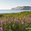 Wildflowers In Gaspe by Gord Horne