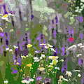 Wildflowers by Jackson Pearson