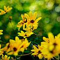 Wildflowers by John Blanchard