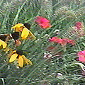 Wildflowers Near Frederick Maryland Contemporary Digital Art by G Linsenmayer