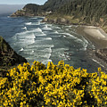 Wildflowers On An Atypical Winter's Day On The Oregon Coast by Belinda Greb