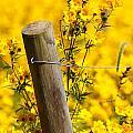 Wildflowers On Fence Post by Carol VanDyke