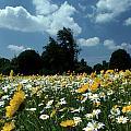 Wildflowers by Skip Willits