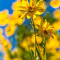 Wildflowers Standing Out by Chad Dutson