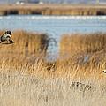Wildlife Photographer's Dream by Loree Johnson