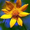 Wildly Yellow by Sandra Clark