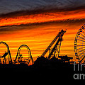 Wildwood At Dawn by Mark Miller
