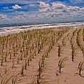 Wildwood Beach Breezes  by David Dehner