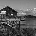Willapa Bay I C by Jeff Wilson