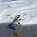 Willet 001 by Larry Ward