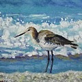Willet by Sharon Guy