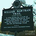 William Bartram by Donna Brown