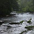 Williams River Rain Downpour by Thomas R Fletcher