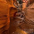 Willis Creek Slot Canyon by Robert Bales