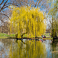 Willow Tree Water Reflection by Matthias Hauser