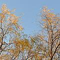 Willows And Sky by Valerie Kirkwood