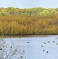Willows Of October by Bonfire Photography