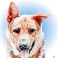 Willy A Former Shelter Sweetie by Dave Anderson