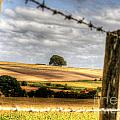 Wiltshire by Traci Law