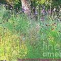 Wimberly Wildflowers by Pamela Smale Williams