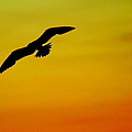 Wind Beneath My Wings by Frozen in Time Fine Art Photography