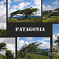 Wind-bent Flag Trees In Tierra Del Fuego by Ralf Broskvar
