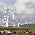 Wind Farm By Cattle Ranch In Washington State by Jit Lim
