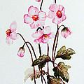 Wind Flowers by Karin  Dawn Kelshall- Best