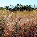 Windswept Grassy Meadow by Jose Oquendo